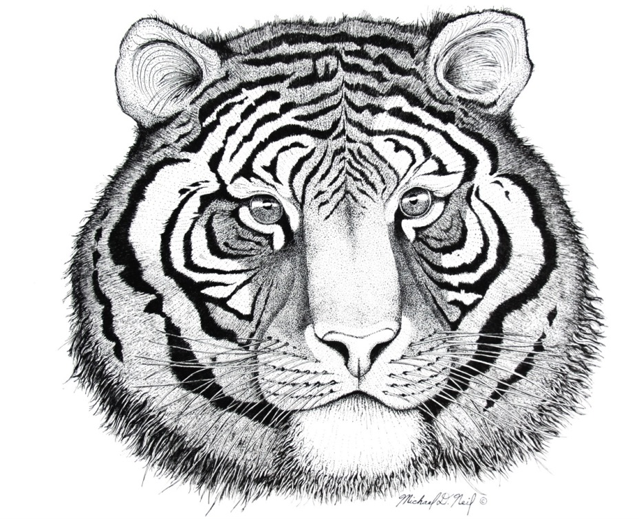 Tiger Pen and Ink.aa